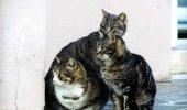 Trino: una casa per curare ed ospitare i gatti