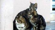 """L'attività di """"A-mici di Trino"""" a favore delle colonie feline"""