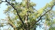 Trino: Bosco della Partecipanza danneggiato e chiuso - Le immagini
