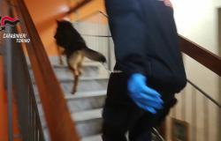 Spedivano droga utilizzando l'appartamento della nonna - Il video
