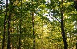 Nasce il nuovo Parco naturale della Partecipanza e delle Grange