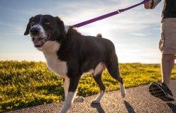 Verso la creazione di un 'albo' professionale dei dog sitter