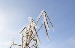 Vercellese, meteo: tempo stabile fino a martedì