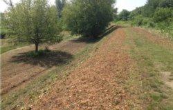 Vercelli: prati e sentieri sull'argine del Sesia