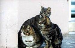 Trino: un riconoscimento a chi aderisce alla raccolta per il gattile