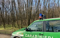 Carabinieri forestale: sequestrate 100 tonnellate di legna
