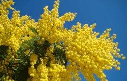 Vercelli: un fiore per le ospiti delle case di riposo