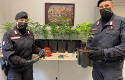 Vercelli:  coltivava marijuana in casa, arrestato