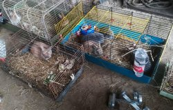 Soccorsi 60 coniglietti, ora sono adottabili
