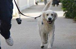 Approvato l'elenco dei dog sitter