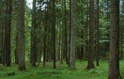 Tre milioni di euro per gli imprenditori forestali