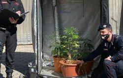 Coltiva una serra di marijuana in casa: denunciata una giovane