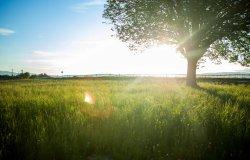 Vercellese: tempo soleggiato fino a inizio aprile