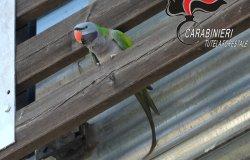 """Biella: pappagallo """"in fuga"""" vicino all'ospedale"""