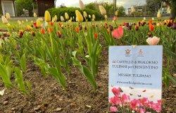 A parco Tournon sono fioriti i tulipani di Pralormo