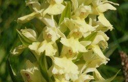 Trino: iniziative online per sapere tutto sulle orchidee