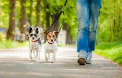 Servizio di dog sitter per malati Covid