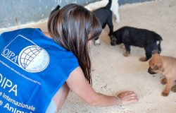 Piemonte: meno ingressi nei canili e più adozioni