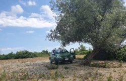 Danneggiano  delle ceppaie in un bosco ceduo, multa da 1500 euro