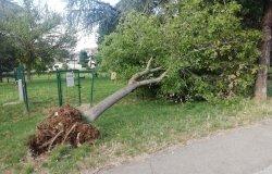Il forte vento sradica un albero che cadendo rompe la recinzione