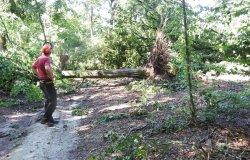 Trino: sabato 24 assemblea per i danni al Bosco della Partecipanza