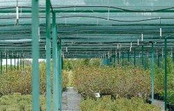 Reti antigrandine, la Regione in soccorso agli agricoltori