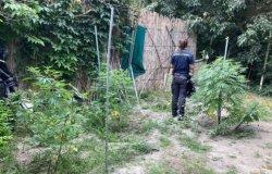 Coltivava marijuana in un terreno in Monferrato: denunciato