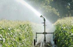 """Confagricoltura: """"Con la siccità aumentano le irrigazioni"""""""