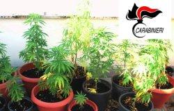 Tronzano: in casa una serra per coltivare stupefacenti, denunciato