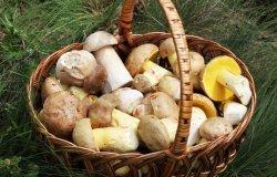 Trino e Palazzolo: attivo il servizio gratuito di controllo funghi
