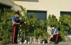 Cannabis tra piante aromatiche e fiori: arrestato un uomo di 37 anni