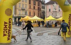 Vercelli: successo per il mercato Campagna Amica On tour