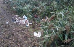 Raccolta e smaltimento rifiuti abbandonati lungo le banchine