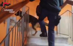 Smantellato spaccio di stupefacenti in Val Susa - Il video