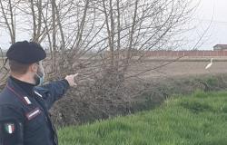 Cattura una specie protetta di airone: denunciato