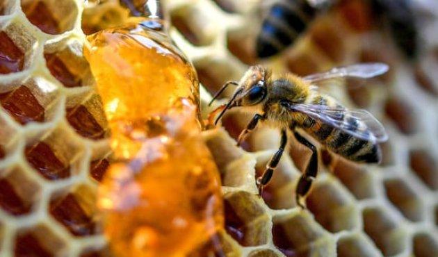 Coldiretti, api: la Regione distribuisca in modo equo i fondi dell'Ocm