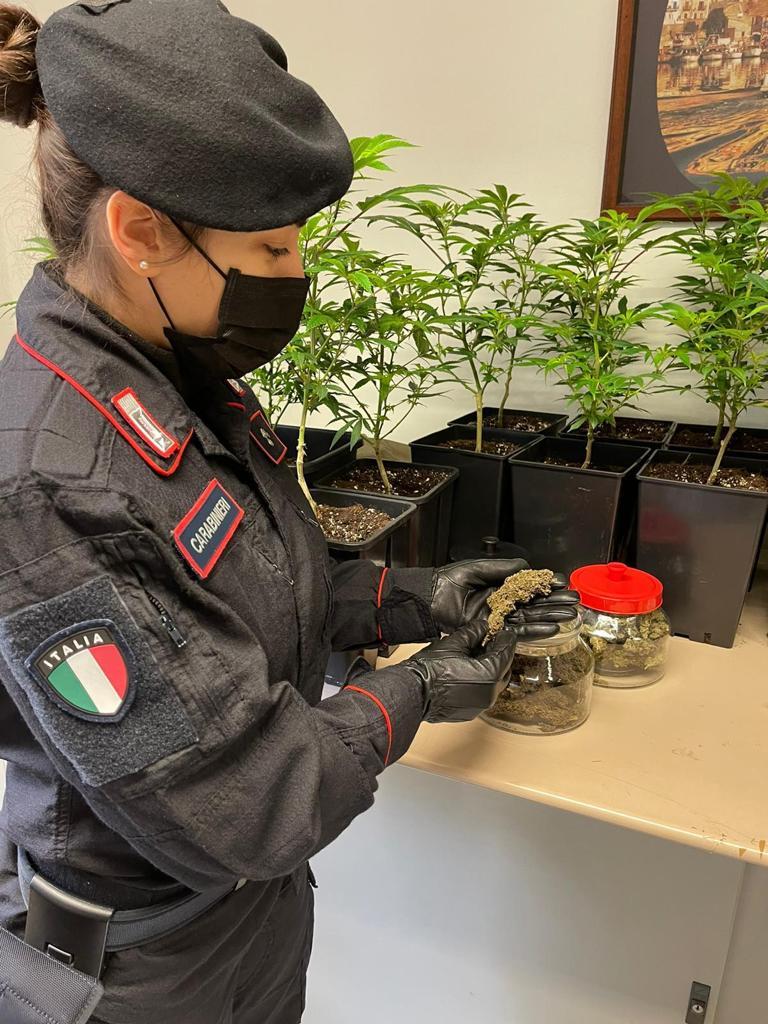 Carabinieri Vercelli Marijuana